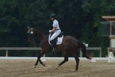 Elo JP | Dressage Horses For Sale | DressageMarket.com