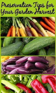 HOW TO; Tips on Preserving your Produce from the Garden. Canning, Dehydration and freezing. (great link to National Center for Home Food Preservation - has a free online intro course)