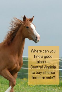 Choose the horse farm that is the best for you in Central Virginia!