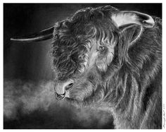 Antony The Bull by Ronny Hart - Antony The Bull Drawing - Antony The Bull Fine Art Prints and Posters for Sale