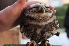 <3 I want an owl