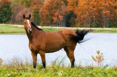 bay horse in autumn Horse Hay, Bay Horse, Horses, Pituitary Gland, Portrait, Animals And Pets, Metabolic Syndrome, Beautiful, Autumn Colours