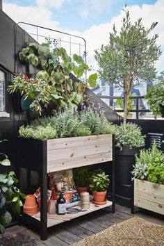 Plants, Culture, Outdoor Seating, Backyard Farming, Metal, Plant, Planets