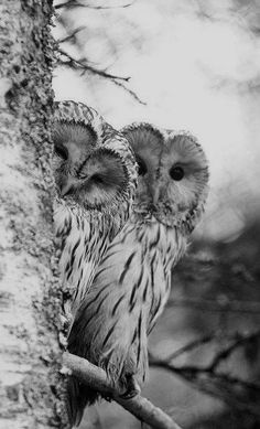 Owls. I want this as a painting in my house!