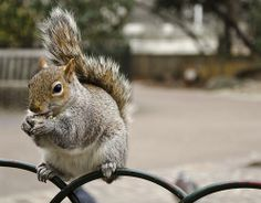 Squirrel! by Clugg14, via Flickr