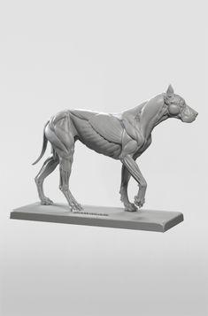 Rare Dog Names - Dog Clothes Tshirt - Human Dog Logo - Samoyed Dog Full Grown Dog Anatomy, Anatomy Poses, Animal Anatomy, Anatomy Art, Anatomy Drawing, Anatomy Sculpture, Rare Dogs, Anatomy For Artists, Dog Logo