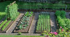 grow your perfect vegetable garden!