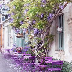 Fallen wisteria petals with chickens at Au Vieux Paris d'Arcole on Rue Chanoinesse.