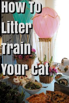 Even the most attentive cat lovers are impatient to use cats that do not use litter box. However, patience is the key to the success of litter box usage. Pet Door, Little Boxes, Litter Box, Beautiful Cats, Cat Lovers, Image Link, Teaching, Pretty Cats, Small Boxes