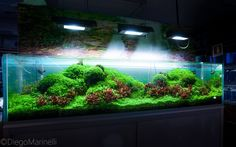 simonsaquascapeblog:  Favourites: massive tank by Diego Marinelli This huge ADA tank by Aquaproject.it is growing beautifully. Not surprises with Diego's good hands and the help of those 3 ADA Solar lighting system. I wish I had both things handy!