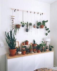 Un jardín dentro de casa realizado con 6 objetos reciclados - Conciencia Eco