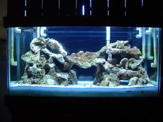 looking for ideas to aqua scape a 125 mixt - Reef Central Online Community Archives