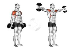 Hantel Scaption – New Ideas Dumbbell Scaption… – Fitnessabs Dumbbell Workout Routine, Full Body Dumbbell Workout, Gym Workout Videos, Biceps Workout, Deltoid Workout, Workout Men, Bodybuilding Training, Bodybuilding Workouts, Weight Training Workouts