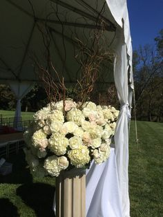 hydrangea and curly willow arrangements line a reception tent
