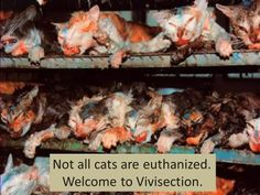 Please ...please do not support animal tested products