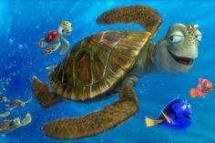 Un viaje con las tortugas hippies