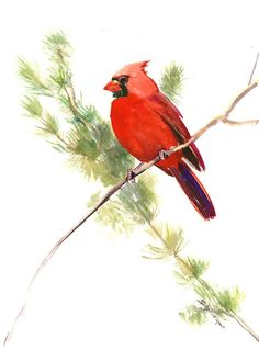 Este listado incluye un acuarela ORIGINAL de pájaro Cardinal norte. La pintura es en papel de algodón 100% libre ácido y mide 15 x 11 por lo que es perfecto para colgar en la sala de estar, cocina o dormitorio de su casa junto con otras piezas de sus favorito. Yo he firmado en la parte delantera y espalda y me garantizan que se trata de una pieza de uno de la misma clase que no se repetirá.   Detalles del artículo: -15 x 11 Acuarela original de un cardenal en papel ácido libre 100% algodón…