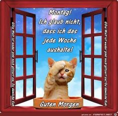 Ich glaub nicht Happy Day, Animals And Pets, Funny, Memes, Happy Monday, Handsome Quotes, Monday Morning Greetings, Good Jokes, Faith