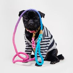 Ombre rope leash from Witty&White.com Rope Dog Leash, Handicraft, French Bulldog, Puppies, Dogs, Animals, Accessories, Craft, Cubs