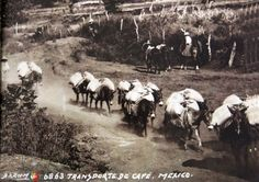 TRANSPORTEDECAFEporelfotografoHUGOBREHMEHacia1930 (Orizaba, Veracruz).
