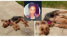 Texas woman leaves dog to DIE in scorching summer sun, brags about it on… Stop Animal Cruelty, Animal Protection, Animal Welfare, Animal Rights, My Heart Is Breaking, Summer Sun, Animal Rescue, Something To Do, Creatures