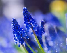 Close Up Pictures Of Flowers - Beautiful Flowers