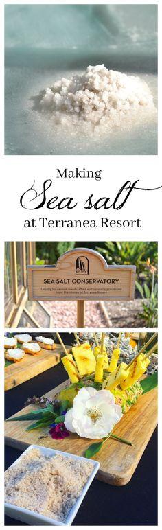 Sea Salt, Straight From The Ocean - Jolly Tomato Make Your Own Kombucha, Sea Beans, Table Salt, New Opportunities, Sea Salt, Summer Time, Ocean, How To Make, Sparkle