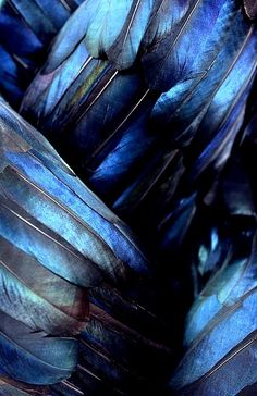 Blue shiny iridescent feathers. Have you ever considered what a MIRACLE a single bird feather is? So many intricate parts, and none would enable the bird to fly if any different. DdO:) MOST POPULAR RE-PINS - http://www.pinterest.com/DianaDeeOsborne/tiny-miracles/ - One of my fav bks by Bill Watterson is Calvin and Hobbes newspaper comics / cartoons strip book, THERE'S TREASURE EVERYWHERE. Well, God put MIRACLES all around, too. Do we SEE them? Romans 1's end.