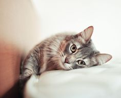 This Woman Went Blind After Her Cat Kissed Her - WomansDay.com
