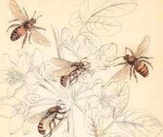 maybe get a Victorian bee on a stenciled rose My grandfather was a bee keeper. Would love to get one in tribute.