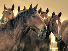 I just signed the petition to ban horse slaughter