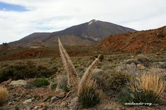 Tenerife senderos......: TENERIFE SENDEROS : RUTA EL SANATORIO