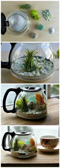 Plants and Coffee // Let's make a coffee pot Terrarium! — A Charming Project Plants and coffee // Let's make a coffee pot terrarium Succulents Garden, Garden Plants, Planting Flowers, Terrarium Plants, Fish Tank Terrarium, Planting Plants, Succulent Terrarium, Air Plants, Indoor Plants