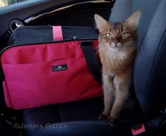 Know the rules of the road for traveling with cats? See 7 tips for driving cats in cars here.