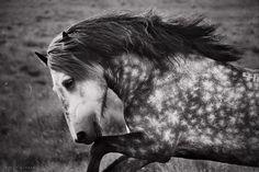 Stunning. Gigja Einarsdottir's photostream - all of her photos of horses are amazing!
