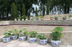 28th National Lotus Exhibition | 2014 – 28th National Lotus Exhibition by China Flower Association ...