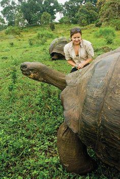 Galapagos tortoises can reach over 5 feet in height. Galapagos Islands, Ecuador