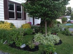 Front view garden June 2014 north to south