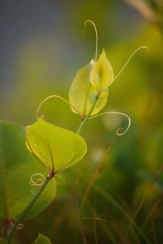 Tendrils by Vito Paratore on 500px