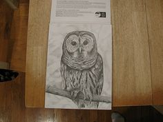 Sanity With Five Kids Barred Owl, Pencil Drawings, Owls, Projects, Art, Log Projects, Art Background, Blue Prints, Kunst