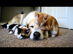 kittens sleeping with dog