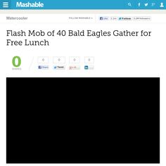 http://mashable.com/2013/05/11/bald-eagles/ Flash Mob of 40 Bald Eagles Gather for Free Lunch | #Indiegogo #fundraising http://igg.me/at/tn5/