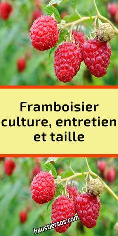 Plantation, Galette, Polenta, Eco Friendly, Buildings, Strawberry, Houses, Culture, Gardens