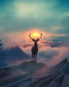 majestic animals animal portraits beautiful sunset amazing sunsets colorful sunset animals beautiful 20 cool photography ideas of this year Amazing Sunsets, Beautiful Sunset, Amazing Nature, Beautiful Places, Amazing Art, Amazing Pics, Beautiful Gifts, Wonderful Places, Wildlife Photography