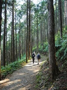 WORLD HERITAGE 世界遺産 KUMANO-KODO ROAD 熊野古道