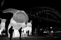 """Wabbit Season."" ""Intrude"" by Amanda Parer for Vivid 2014. Vivid 2016 starts May 27!  Sydney June 2014. Sony A7. Sony 35mm F2.8.  #sony #sonya7 #sonyalpha #sonyimages #Sydney #therocks #sydneyharbourbridge #ilovesydney #sydneylocal #sydneyfolk #igerssydney #VividSydney #reportage #documentary #magnumphotos #headonphotofestival #newsouthwales #rsa_night #rsa_bnw #pocket_bnw #pocket_nights  #photojournalism #agameoftones #nightimages #nightphotography #focusaustralia #amateurs_bnw #bnw_rose…"