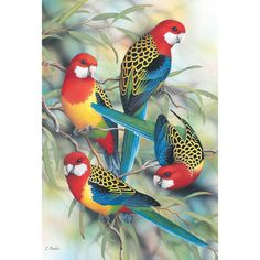 DIY Diamond Painting Kits Colorful Birds on the Branches Exotic Birds, Colorful Birds, Colorful Parrots, Pretty Birds, Beautiful Birds, Australian Birds, 5d Diamond Painting, Cross Paintings, Paintings Of Birds