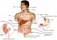 Delen van de organen