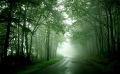 Green covered Road