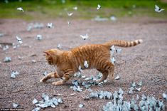 Excited Lepa charges at the butterflies outside his home in Leningrad Oblast, Russia nearly trampling some of them in the process